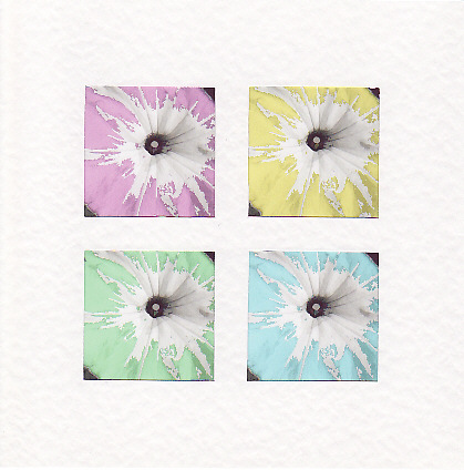 SALE Petunia Flower Images  -  Greetings Card or Notelet - Floral Photo Prints