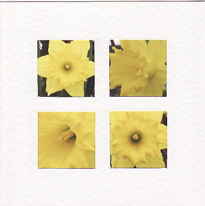 SALE - Daffodil Flower Images  -  Greetings Card - Floral Photo Prints