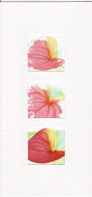 SALE -Flamingo Flower Images  - Greetings Card or Notelet -  Floral Photo Prints