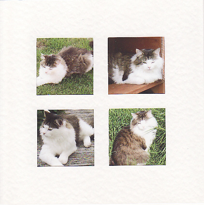SALE Maine Coon Cat Images  -  Greetings Card or Notelet - Animal Photo Prints