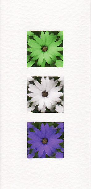 SALE - African Daisy Images - Greetings Card or Notelet - Floral Photo Prints