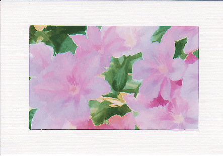SALE -Clematis Flowers Image 3  - Greetings Card or Notelet - Floral Photo Print