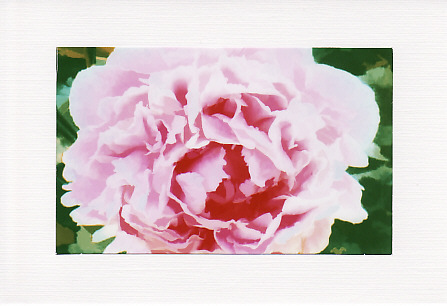 SALE - Pink Rose Image 3 - Greetings Card or Notelet - Floral Photo Print