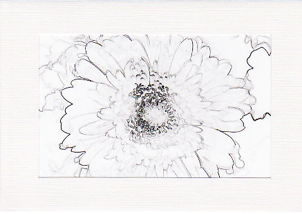 SALE - Gerbera Flower Image - Greetings Card or Notelet - Floral Photo Print