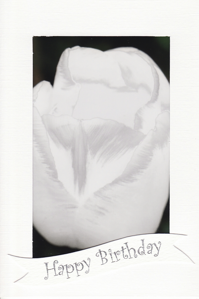 SALE - White Tulip Image - Happy Birthday Card or Notelet - Floral Photo Print