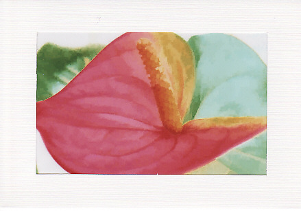 SALE - Flamingo Flower Image - Greetings Card or Notelet - Floral Photo Print