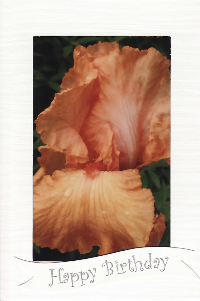 SALE - Orange Iris Image - Happy Birthday Card - Photo Print