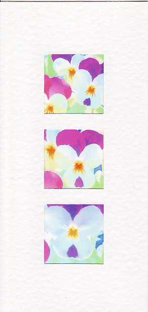 SALE - Viola Images - Greetings Card or Notelet - Floral Photo Prints