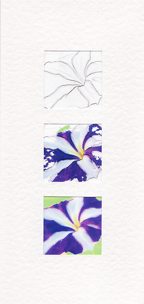 SALE - Petunia Images - Greetings Card or Notelet - Floral Photo Prints