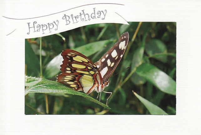 SALE - Perched Butterfly - Happy Birthday Card - Photo Print