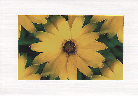 SALE - Yellow African Daisy Image  Greetings Card Or Notelet  Floral Photo Print