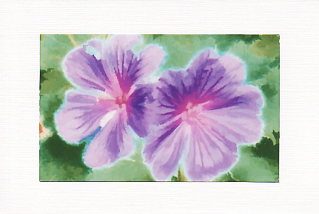 SALE Small Purple Flowers Image 1  Greetings Card Or Notelet  Floral Photo Print