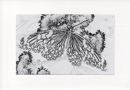 SALE Sketch Effect Paper Kite Butterfly Image Greetings Card  Insect Photo Print