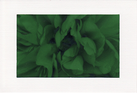 SALE - Dark Green Peony Image - Greetings Card Or Notelet  -  Floral Photo Print