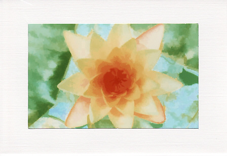 SALE - Water Lily Image - Greetings Card Or Notelet  -  Floral Photo Print