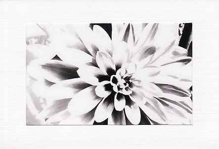 SALE - Black & White Dahlia Image - Greetings Card  -  Floral Photo Print