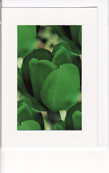 SALE - Green Tulip Image - Greetings Card Or Notelet  -  Floral Photo Print