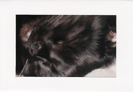 SALE - Black Cat Image 4  - Greetings Card Or Notelet  - Animal Photo Print