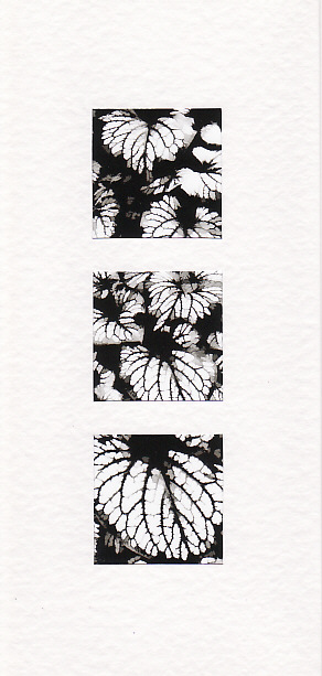 SALE - Black & White Leaf Images - Greetings Card  - Floral Photo Prints