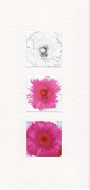 SALE - Pink Gerbera Images - Greetings Card or Notelet - Floral Photo Prints