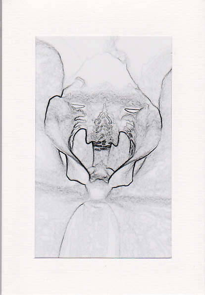 SALE - Sketch Effect Orchid Image - Greetings Card - Floral Photo Print