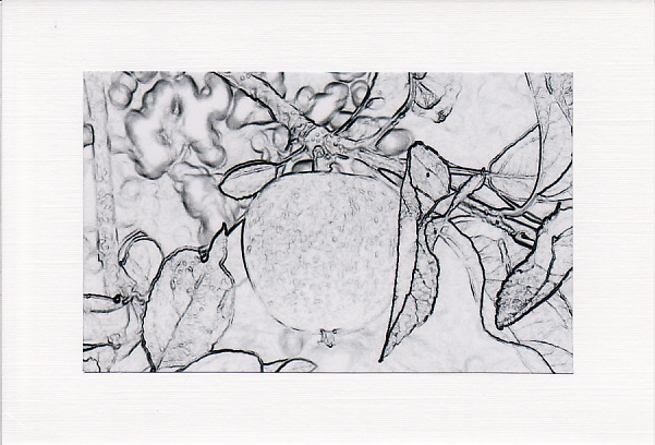 SALE - Sketch Effect  APPLE Image - Greetings Card or Notelet - Photo Print
