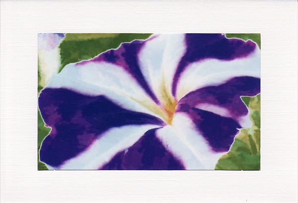 SALE - BRIGHT PETUNIA Image - Greetings Card Or Notelet - Floral Photo Print