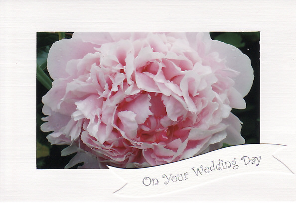 SALE - Unusual Photo On Your Wedding Day Card - PALE PINK ROSE