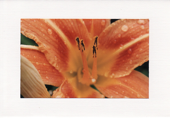 SALE - Orange Lily Image 2  - Greetings Card Or Notelet - Floral Photo Print