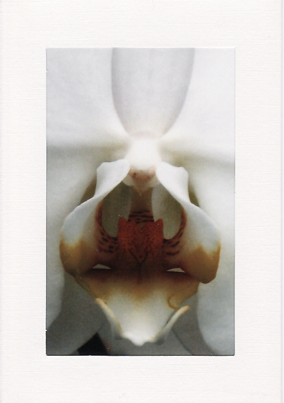 SALE - White Orchid Image 2  - Greetings Card Or Notelet - Floral Photo Print
