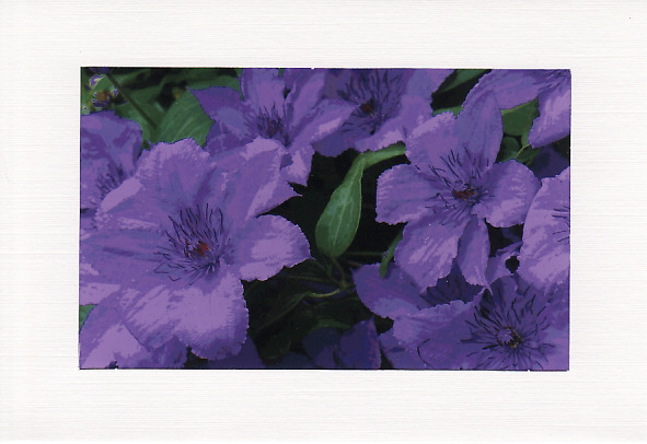 SALE - Purple Clematis Image - Greetings Card Or Notelet - Floral Photo Print