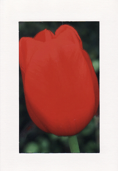 SALE - Red Tulip Image - Greetings Card Or Notelet - Floral Photo Print