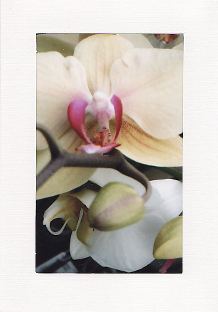 SALE - Orchids Image 4  - Greetings Card Or Notelet - Floral Photo Print