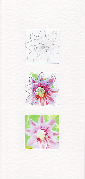 SALE - Clematis Images 5  - Greetings Card or Notelet -  Floral Photo Prints