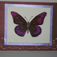 Blank greetings card - hand coloured butterfly image FREE p&p