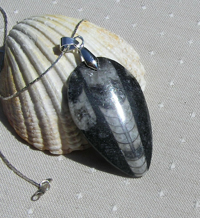 Polished Orthoceras Fossil Pendant with Silver Plated Chain