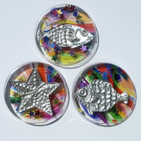 Novelty Fun Fish Fridge Magnets, Set of Three