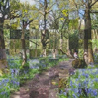 Large Bluebell Woods Collage