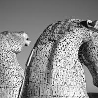 ANDY SCOTT'S KELPIES  (version 3)  blank greeting card
