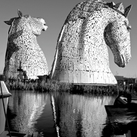 ANDY SCOTT'S KELPIES  (version 4)  blank greeting card