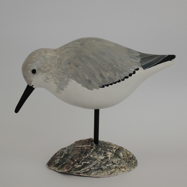 Sanderling on oyster shell