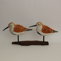 Summer dunlin duo