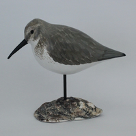 Dunlin on oyster shell