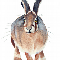 Standing Hare Print