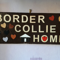 border collie home