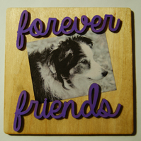 Forever friends border collie