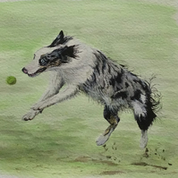 Collie ball chasing