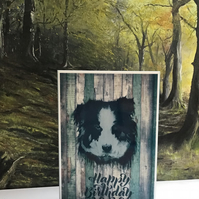 Birthday border collie