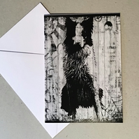 Black and white border collie card