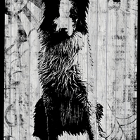 Border collie black and white print